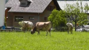 Bauernhof in Mellau
