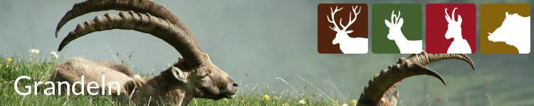 Grandeln in der Jägersprache